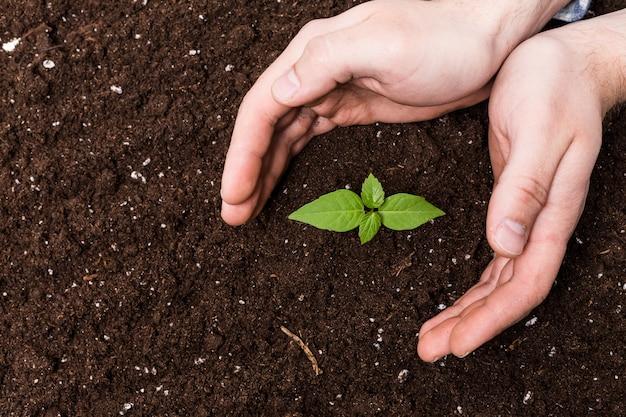 2つの手を保持し、若い緑の植物を気遣うこと