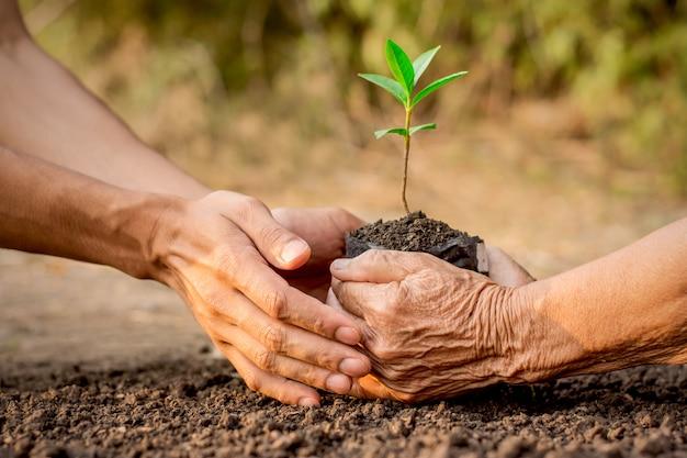 老婆と若い男の両手土に苗を植える手伝い。