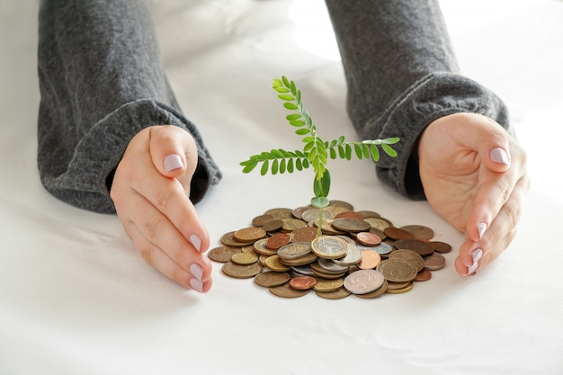 Two hands that are planting trees on a pile of money.