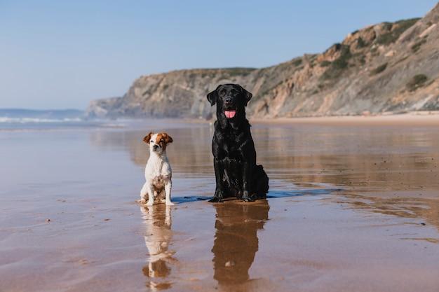 ビーチで楽しい2つの幸せな犬。