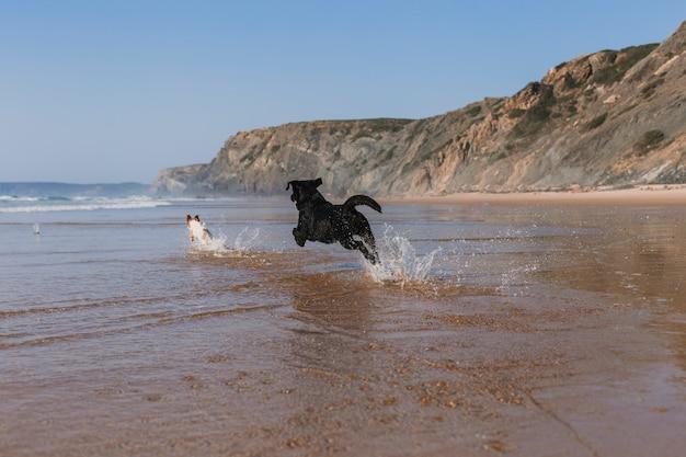 Две счастливые собаки веселятся на пляже.