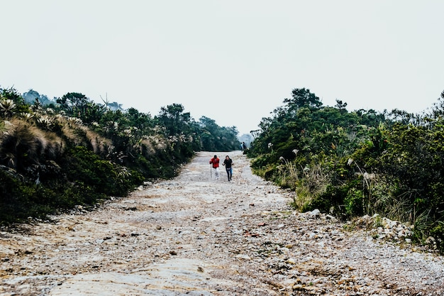 Two hikers walking through the road surrounded by green plants