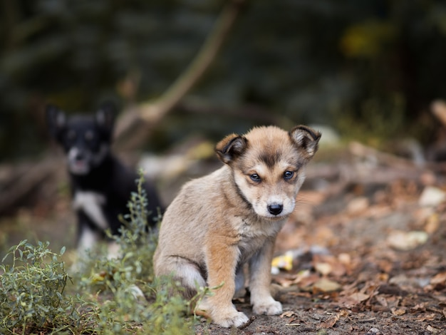 Two homeless dirty puppies left on the street