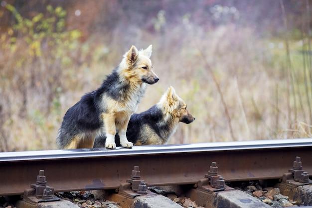線路近くのホームレスの犬2匹