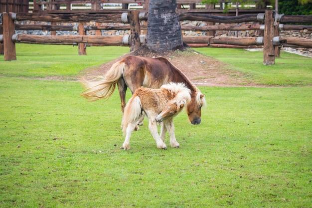 Две лошади на поле зеленая трава