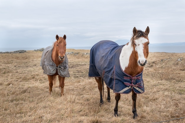 Two horses covered with rugs on the winter pasture