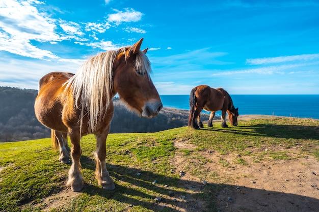 Two horses free from mount jaizkibel near san sebastian, gipuzkoa. spain