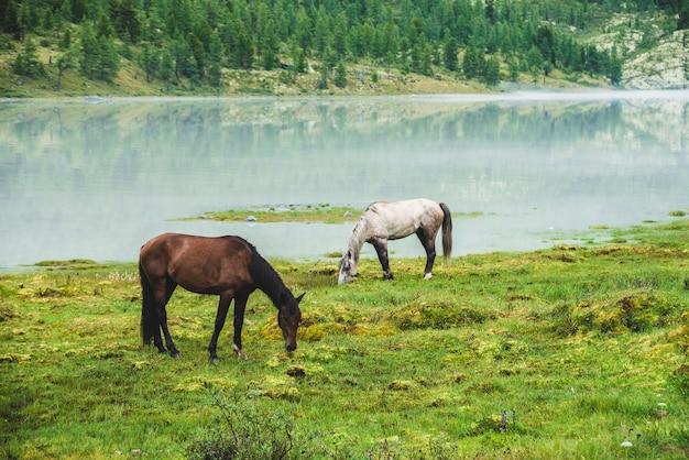 Две лошади пасутся на лугу у реки в горной долине.