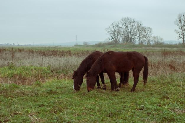 2頭の馬が放牧する