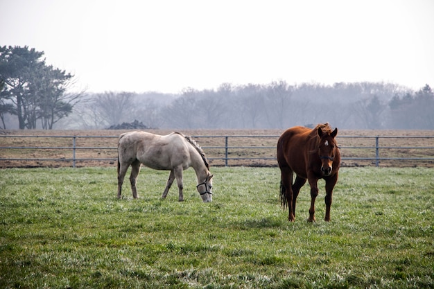 フィールドで放牧2頭の馬