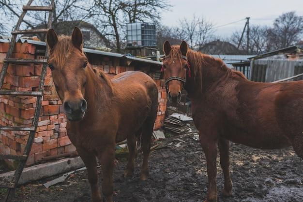Две лошади на ферме