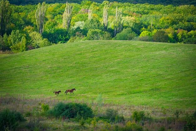 緑の牧草地と雲と青い空に2頭の馬