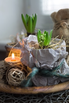 Two hyacinth plants in wrapping paper and a candle