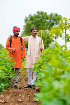 Two indian farmers working and discuss at green cotton field.