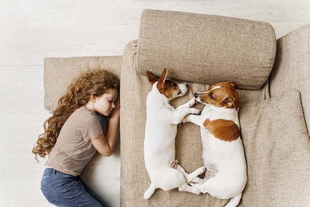 Two jack russell are sleeping on the bed, and the owner of the girl is sleeping on the floor.