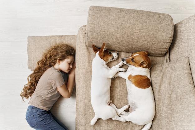 두 명의 잭 러셀이 침대에서 자고 있으며 소녀의 주인이 바닥에서 자고 있습니다.