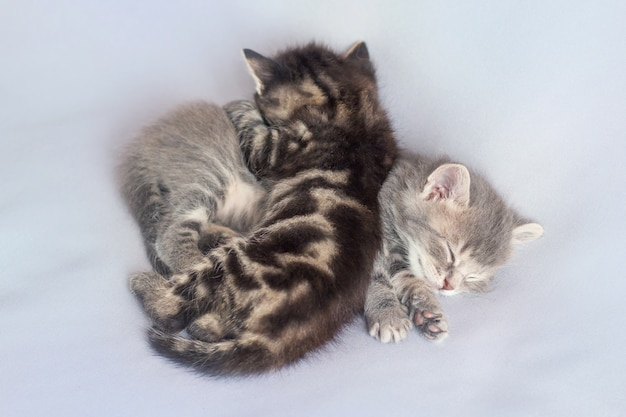 Two kittens are hugging and sleeping hard, light background