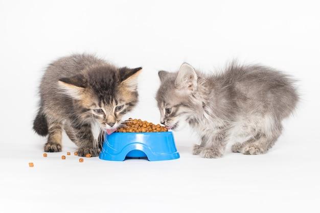 Два котенка едят еду из синей тарелки на белом фоне
