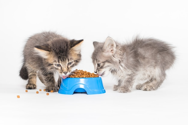 Two kittens eating food from a blue plate on a white background