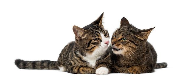 Two kittens in front of a white wall