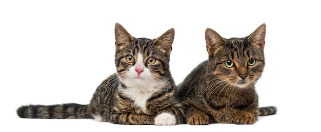 흰 벽 앞에서 두 고양이