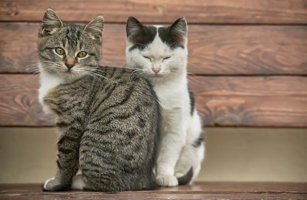 木製のベンチに座っている2匹の子猫が鼻を柔らかくしてレジュメポイントを見渡しています。
