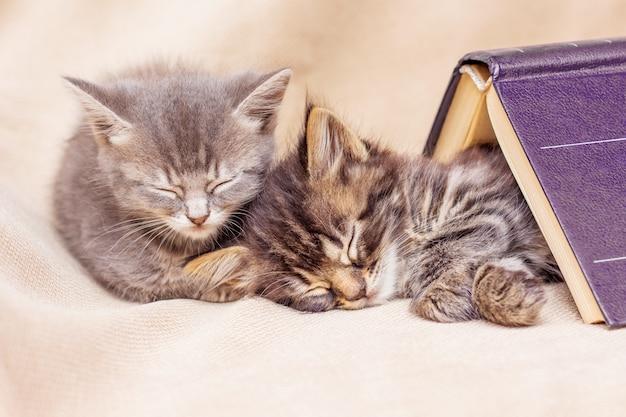 Два котенка спят хорошо, прикрыты книгой. перерыв в обучении для сна