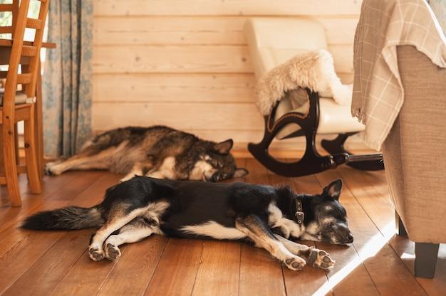 Две большие собаки спят на деревянном полу рядом с креслом-качалкой.