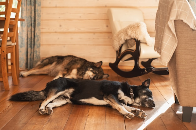 Two large dogs sleep on the wooden floor next to a rocking chair.