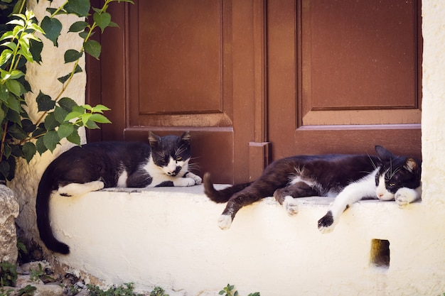 Two lazy cast lying outdoors in the shadow