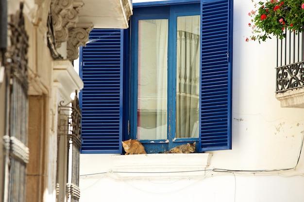 Две ленивые кошки, отдыхающие на подоконнике