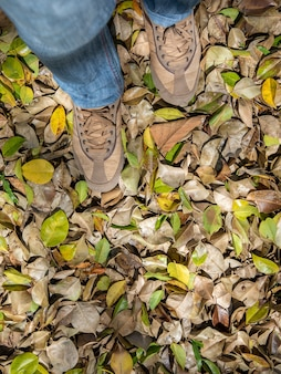 Two legs stand on dry leaves in autumn.