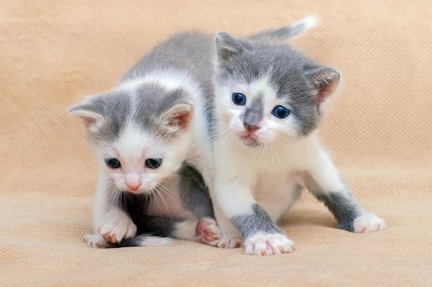 2匹の小さな愛らしい子猫が遊んでいます