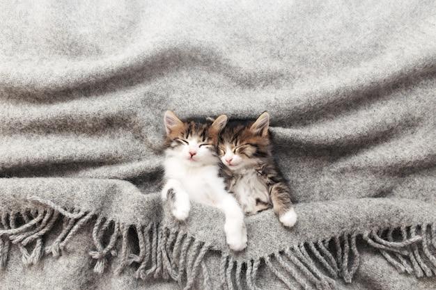 두 마리의 작고 사랑스러운 삼색 고양이는 눈을 감고 회색 솜털 담요로 덮인 채 잠을 자고 있습니다. 거꾸로 누워 편안한 잠자는 고양이의 사진. 건강하고 행복한 애완 동물의 개념