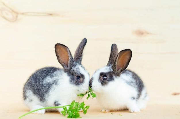 2匹の小さな赤ちゃんウサギ、レタスの葉とニンジンを食べるウサギ。げっ歯類、ペット用の餌。幸せなイースターの概念。