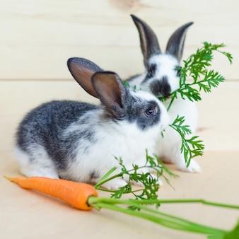 Два маленьких кролика едят свежие овощи, морковь, листья. кормление грызуна сбалансированным рационом, кормом.