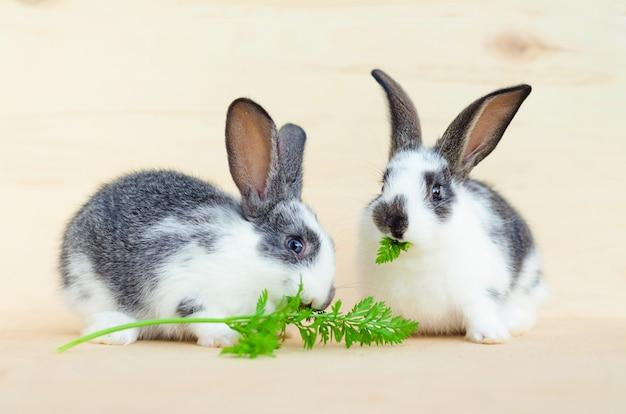 葉を食べる2匹の小さなウサギ