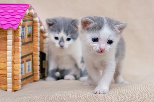 おもちゃの家の近くで2匹の小さな猫が遊んでいます