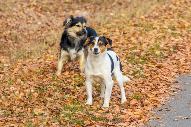 秋の公園を散歩している2匹の小さな犬