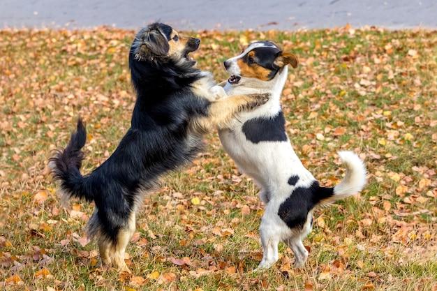 잔디에 정원에서 노는 두 개의 작은 개