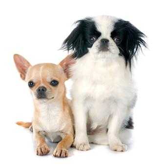 2匹の小さな犬