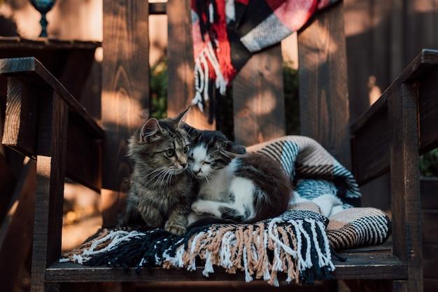 2匹の子猫が格子縞の毛布の上で庭で日光浴をします