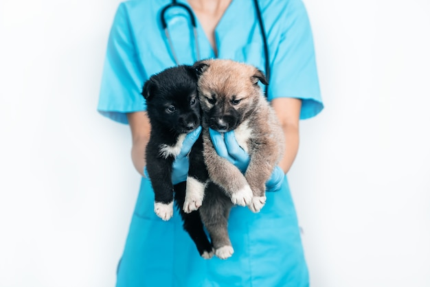 クリニックの獣医の腕の中で2匹の小さな子犬。ペットの検査と予防接種。雑種犬