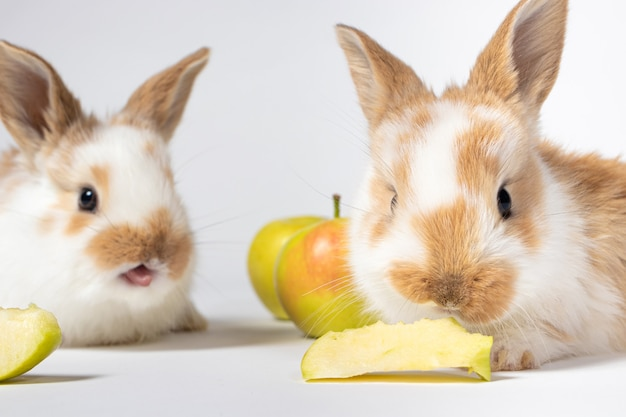 두 개의 작은 토끼가 흰 바탕에 사과를 먹고 있다