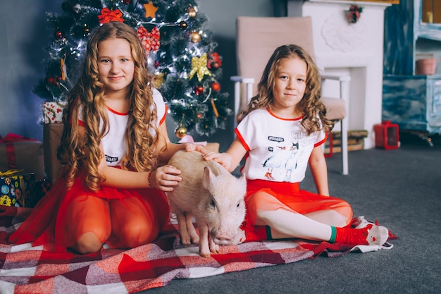 Two little sisters are playing with a mini pig near a christmas tree