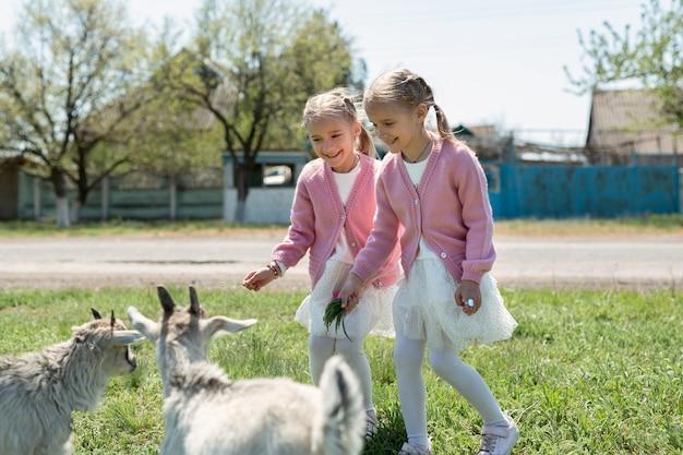 Две сестренки-близнецы кормят коз на лугу в деревне.