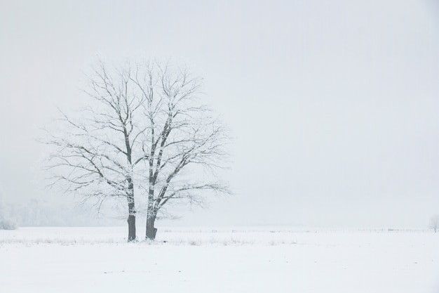 Два одиноких дерева в зимнем поле туманным утром. зимний пейзаж