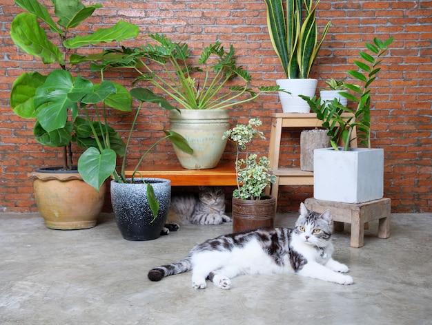 空気浄化観葉植物、モンステラ、フィロデンドロン、フィカスリラタ、ヘビの植物と鍋のザンジバルの宝石とリビングルームの内部のレンガの壁で遊んでいる2つの素敵な幸せな猫