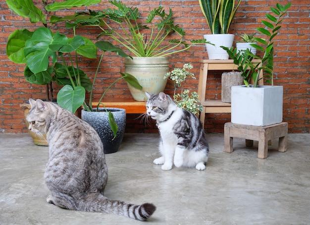 Две милые счастливые кошки играют во внутренней кирпичной стене гостиной с очищающими воздух комнатными растениями, монстера, филодендрон, фикус лирата, змеиное растение и занзибарский драгоценный камень в горшке