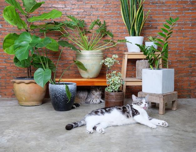 두 마리의 사랑스러운 행복한 고양이가 거실 내부 벽돌 벽에서 공기를 정화하여 실내 식물을 정화합니다 .monsteraphilodendronficus lyratasnake plant and zanzibar gem in pot